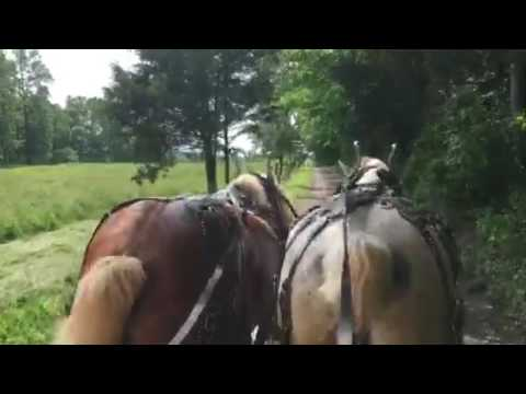 Horse Drawn Conestoga Wagon Ride