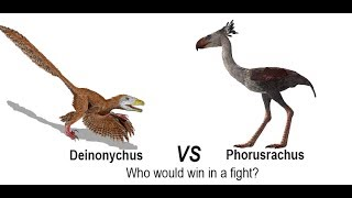 Raptor vs Terror Bird - Who would win in a fight?