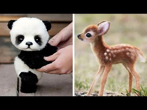 10-cutest-baby-animals-of-all-time