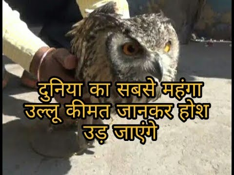 Worlds most expensive owl, this owl demand in International market is very much.