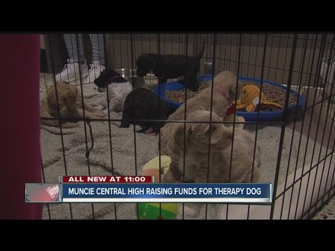 Muncie Central High School raising funds for therapy dog
