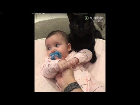 Sweet kitten preciously cuddles baby girl