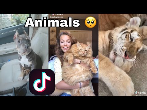 Cute Animals TikTok Compilation