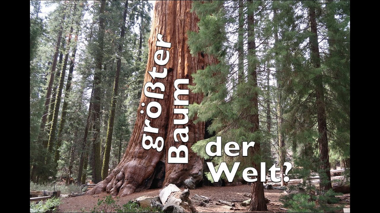 der gr te baum der welt sequoia nationalpark youtube