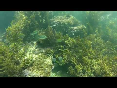 Buceo en Puerto Vallarta | Scuba Diving in Puerto Vallarta