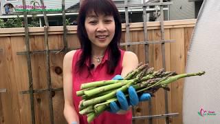 Thu Hoạch Măng Tây, Hồng Giòn Ra Hoa Lần Đầu 🇨🇦282》 Harvesting Asparagus | Vườn Rau Việt Ở Canada