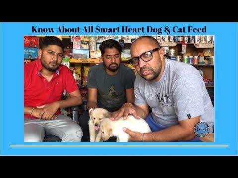 Pet Care - Demo For Unpure breed - Bhola Shola
