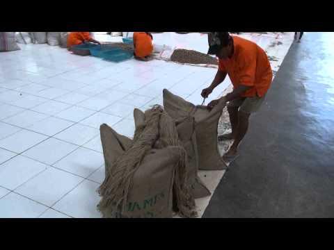 Webb James - la cucitura dei sacchi di noce moscata