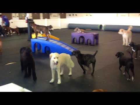 Big Dog Daycare Jacksonville FL