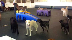 Big Dog Daycare Jacksonville FL