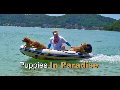 Download Puppies in Paradise