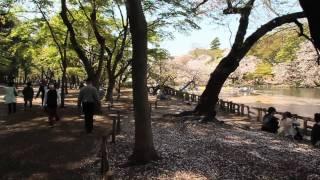 Canon EOS 60Dで桜散る 井の頭公園