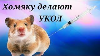 Хомяку делают уколы!!!(, 2016-12-01T16:43:15.000Z)