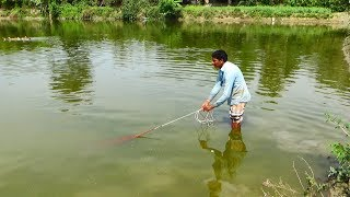 Net Fishing | Catching Fish With Cast Net | Net Fishing in the village (Part-234)