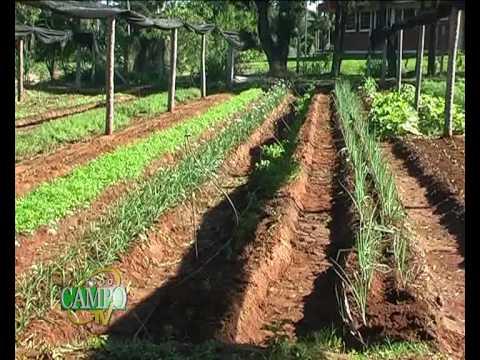 Producci n en huerta org nica youtube for Plantas para huerta organica