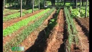 Producción en Huerta Orgánica