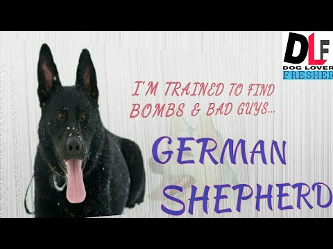 German shepherd dog (IN HINDI)BY Dog lover fresher