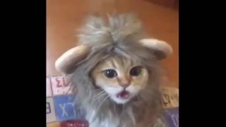 Эти забавные котики #2/This is Funny Cat(CatsLIVE)
