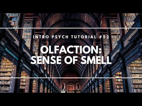 Olfaction: Sense of Smell (Intro Psych Tutorial #52)