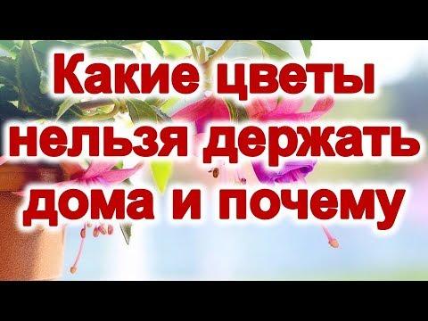 Какие цветы нельзя держать дома и почему | Эзотерика для Тебя Советы Приметы