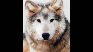 Eternal Tears Of Sorrow - The River Flows Frozen (wolves)