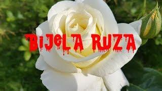 Bijela ruža | CREEPYPASTA