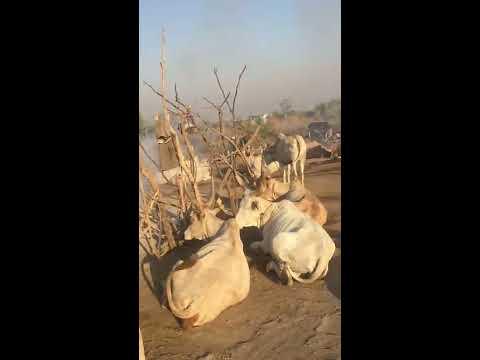 From australia to  South Sudan. (Cattle Camp) Juba,  South Sudan 2018