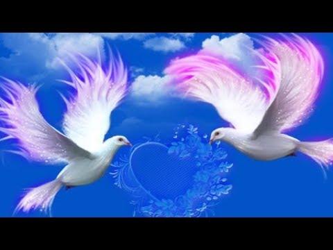 Love Birds pictures