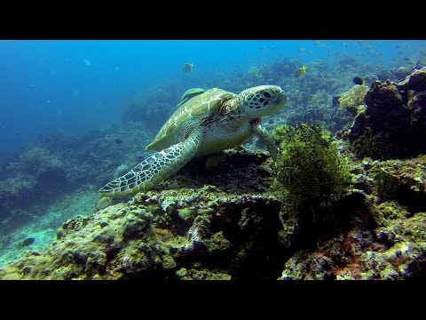 Diving Bohol 2016 with Seaquest - a Tribute to Marg