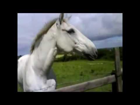 ржание коней