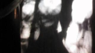 Ghosts, Tree Creatures or Aliens?