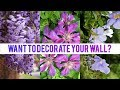 Want To Decorate Your Wall  Then You Should Definitely Checkout These Climbing Plants