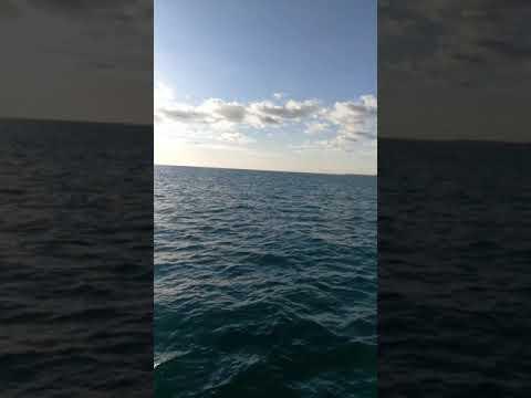 Invictus Sicily Delfini In Barca A Vela 8 Febbraio 2020 Marina Di Ragusa