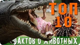 видео интересные факты про животных