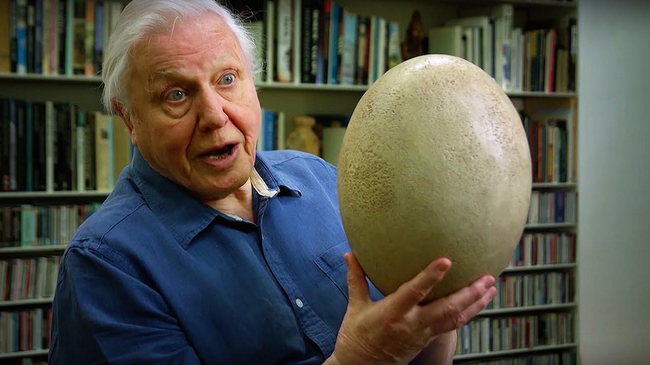 David Attenborough Museum Of Natural History
