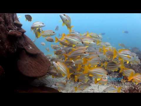 Heron Island travel video guide Queensland Australia