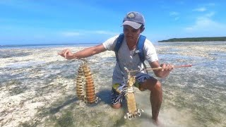Hunting Mantis Shrimp in Tropical Island - Catch & Cook Camping on a Remote Island