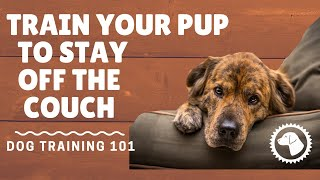 How To Train Dogs To Stay Off Furniture | DOG TRAINING 🐶 Brooklyn's Corner