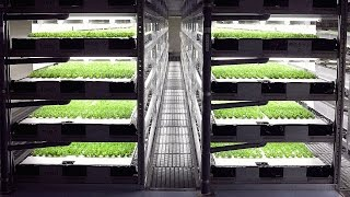 Robot Farm to Harvest 30,000 Heads of Lettuce Daily