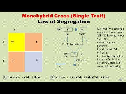 Mendel's Genetic Laws