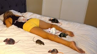 RAT PRANK ON GIRLFRIEND!! (BOYFRIEND REVENGE PRANK)