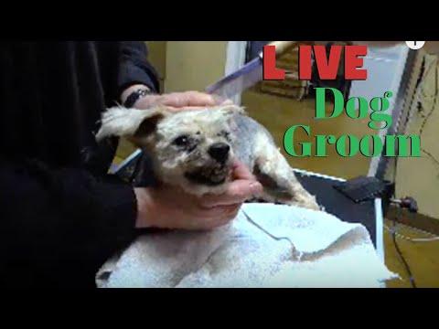 LIVE MEAN dog parent assist