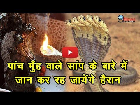 Must Watch: पांच मुँह वाले सांप के बारे में जान कर हो जायेंगे हैरान! | Story About Five-Headed Snake thumbnail