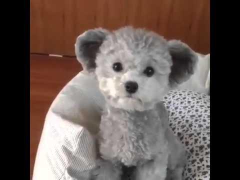 Teddyhund Youtube