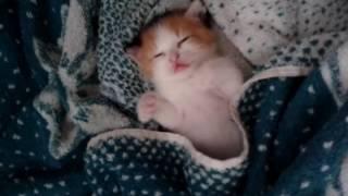 Сон спящего котёнка