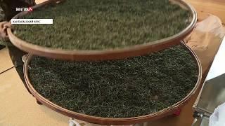 Якутский иван-чай планируют поставлять японцам