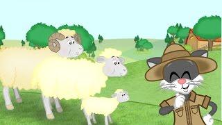 Découvre les animaux de la ferme avec Tipo -Les Moutons- Les Tiboon's