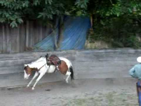 Bucking Horse in Round Pen