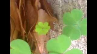 Plaid   Sincetta