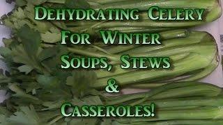 Dehydrating Celery!